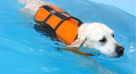 Image result for dog hydrotherapy